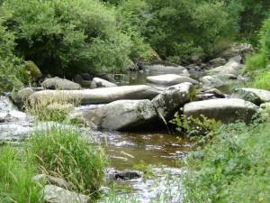 ruisseau-à-truite